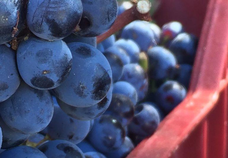 cerasuolo di vittoria strada del vino cerasuolo di vittoria