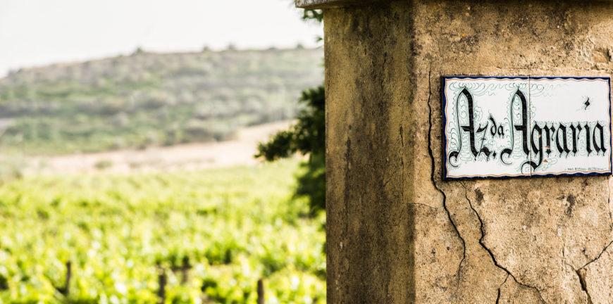 strada vino cerasuolo tenuta valle delle ferle